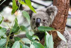 koala during our corporate retreat trip