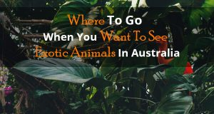 Where To Go When You Want To See Exotic Animals In Australia